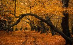 Frithsden Beeches, Ashridge, Hertfordshire,England