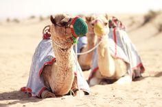 Dubai to do tips | Queen of Jet Lags