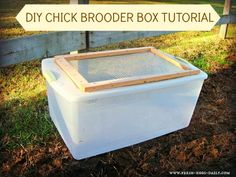 Repurpose a plastic tote to create a brooder box, using two to create a condo for larger birds, like ducks. Hang a heat lamp on a chain overhead to adjust height as they grow and need less. Keep in the garage for easy care/access. Hose down between batches of babies