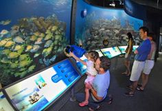 Visit baby conchs at theEco Discovery Center in Key West