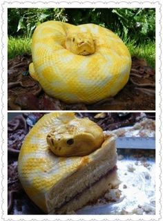 Python cake - Melissa do you think we should make mom this cake for her b-day? You know since she LOVES snakes so much!  lol