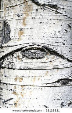 aspen...eye