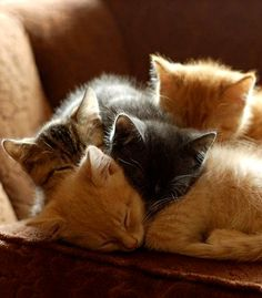 kitten pile ... sometimes i wish i was a kitten ... so i could cuddle just like these guys