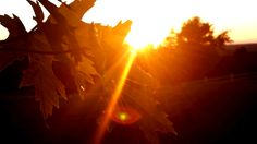 My 13 year old daughter's photo - sun through the branches - styletomoveblog.blogspot.ca