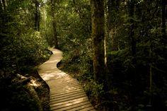 Hier's ses woude in Suid-Afrika waar jy ure lank kan gaan stokkiesdraai en foto's neem. Places To Go, Country Roads, African, Plants, Rice, Planters, Plant, Planting, Planets