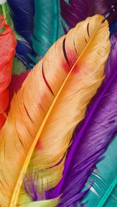 iphone wallpapers background - dyed color feathers ...