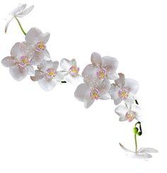 Gify,animacja,obrazki PNG: Wiosna-kwiaty