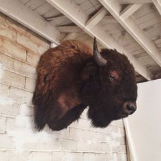 """beamandanchor: """" We need help naming our new friend! (at Beam & Anchor) """" New Americana, Vintage Soul, Big Sky, We Need, Taxidermy, New Friends, Beams, Anchor, Cow"""