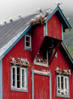 Red barn seagulls