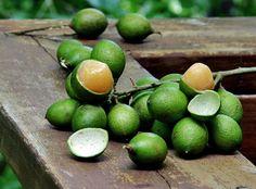 Mamoncillo aka Spanish lime, genip, guinep, genipe, quenepa, ackee, and mamon.