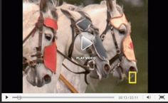 Video Writing Prompts: History of Horses  K-12