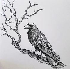 An illustration I made during the Inktober of 2018 by using a dot method together with line drawing. Ravens are one of my favorite subjects to draw both because of the mythology and of how wise these animals are.    Check out my Instagram account @ronjarikissa_art if you want to see more of my work. :)