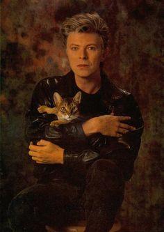 Abyssinian cat & David Bowie