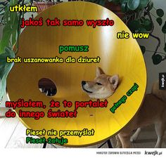 pomusz pieseł Wtf Funny, Funny Cats, Funny Memes, Jokes, Doge Meme, Text Memes, Good Mood, Laughter, Comedy