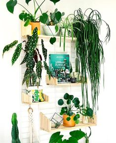 (@smartplantapp) в Instagram: «◁ B o o k C l u b S e l e c t I o n ▷⠀ Looking to grow an indoor garden and be surrounded by…»