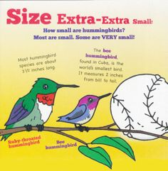 Audubon Adventures shows us just how small a hummingbird really is.