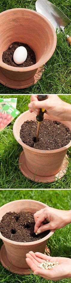 Planting a vegetable garden in pots Place raw uncracked egg in bottom. As it decomposes it naturally fertilizes your mini- veg garden. Do outside of course! The post Planting a vegetable garden in pots appeared first on Gardening.