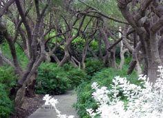 Chaste Trees l photo Helen Weis