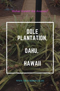 the 25 best dole plantation hawaii ideas on pinterest pineapple plantation oahu and hawaii. Black Bedroom Furniture Sets. Home Design Ideas