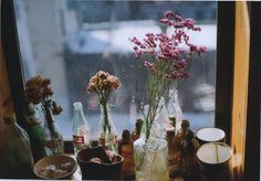 dried flowers in a window