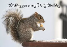 59d1832b800da5dc957a9dee7767b7b5 birthday wishes quotes funny birthday cards happy birthday squirrel squirrels pinterest squirrel and,Squirrel Birthday Meme