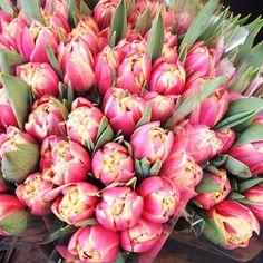 Tulips! - Copyright Carla Coulson