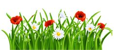 """Photo from album """"Трава, цветы"""" on Yandex. Star Themed Classroom, Love Wallpapers Romantic, Grass Flower, Plant Drawing, Spring Design, Flower Clipart, Flower Frame, Flower Wallpaper, Indoor Garden"""