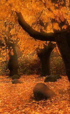 The Autumn at Viento, Oregon, USA