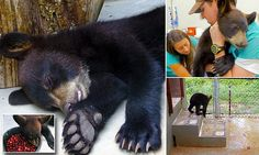 Bear cub who rescued after she jumped into river guide's raft