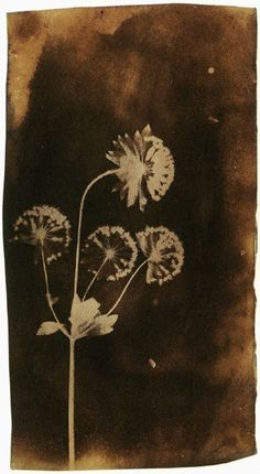Fox Talbot, Melancholy Gentleman, 1838, photogenic drawing.
