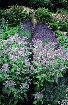 Rosemary Verey's Barnsley House in Gloucestershire. Potager. Kitchen herb vegetable garden. Borage & Lavender line the path -- photo John Glover