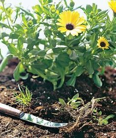 Grapefruit knife in a garden Изогнутое лезвие удобно для удаления сорняков в труднодоступных местах или в цветочных горшках