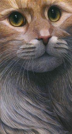 Maine Coon Cat Painting - Cropped Cat 4 by Carol Wilson Animal Paintings, Animal Drawings, Cat Drawing, Beautiful Cats, Dog Art, Crazy Cats, Cats And Kittens, Cute Cats, Fine Art America