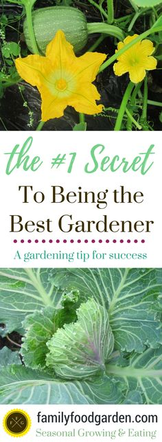 I get asked all the time how I learned to grow food for our family. Did I learn how to grow and preserve from a family member? The truth is I learned to be the gardener I am today from making so many mistakes & changing my game plan mid-season. You might be dreaming of...