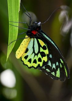 Butterfly-wonderful colors
