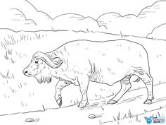 Cape Buffalo Coloring Page Free Printable Coloring Pages