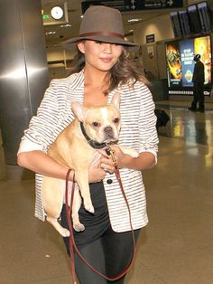 Stars and Their Pets | CHRISSY TEIGEN | Mrs. John Legend totes some precious cargo – her French bulldog, Pippa – through Los Angeles International Airport on Wednesday.