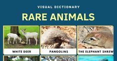 Rare Animals | Top 11 Rarest Animals in the World with Amazing Facts 1 Frog Species, Animal Species, Endangered Species, Amphibians, Mammals, Elephant Shrew, Philippine Eagle, Visual Dictionary, Rare Animals
