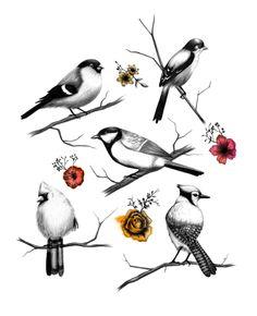 BIRDS & FLOWERS - Amanda Mocci