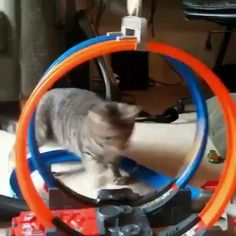 How To Entertain A Cat ? How To Entertain A Cat ? This image h… – funny cats Funny Cute Cats, Cute Funny Animals, Cute Baby Animals, Cat Lover Gifts, Cat Gifts, Crazy Cat Lady, Crazy Cats, Animal Humour, Gato Gif