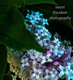 Sweet Freedom Photography