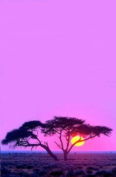 African sunset -Nature Pictures