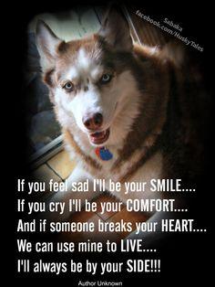 Love this! Huskies always by my side. ❤️