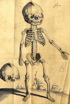 Another creepy/cute baby skeleton, this time from a 1615 anatomy book by the wonderfully-named Petri Paaw.