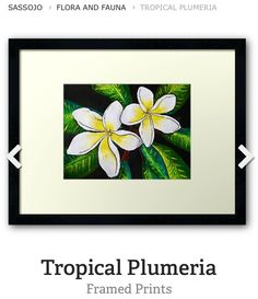 Framed print of Tropical Plumeria by SassoJo at www.redbubble.com/people/SassoJo