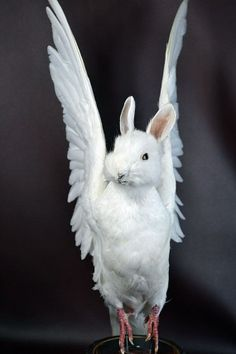 Gaff taxidermy bunny/dove