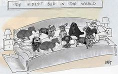 Widest Bed - and they need it!  They need one even bigger!