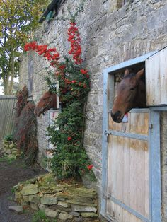 Yes, I would like to visit an Irish Stable...and take home a goody bag - with four hooves preferably