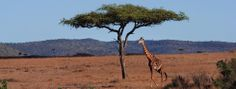 When people think of safari in Africa, Kenya is the destination that comes to mind.