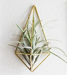 Himmeli Air Plant Sconce by Handmade SamMade on Scoutmob Shoppe